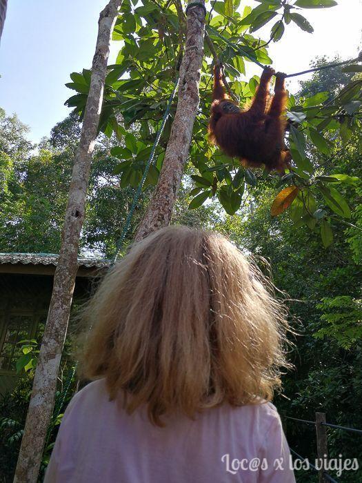 Borneo con niños: Ver orangutanes