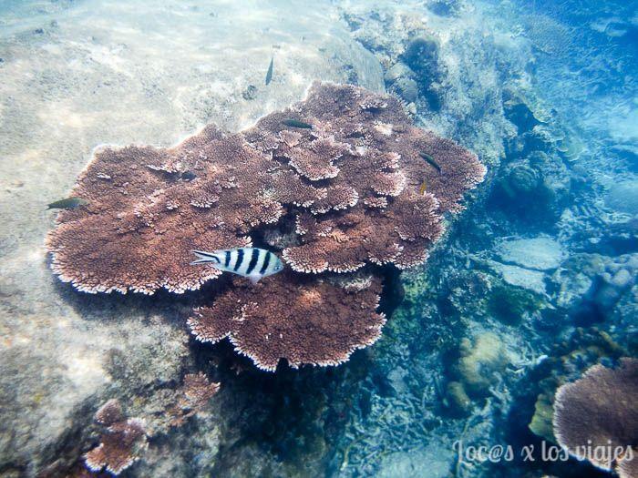 Fondo marino en Perhentian Besar