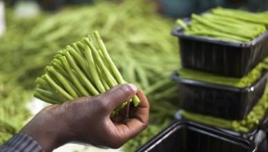 Een slechtbetaald seizoenarbeider in Kenya verpakt boontjes, die dezelfde dag nog op het vliegtuig naar Europa gaan, waar ze de volgende dag in de schappen van de supermarkten liggen. Met SDG12 wil de VN deze manier van werken drastisch verandere