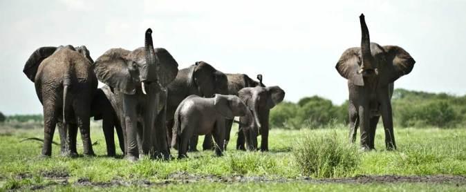 Elephants in Tarangire National Park.gallery_image.4