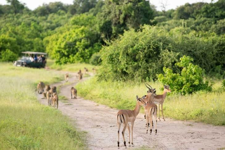 Hwange National Park.gallery_image.1