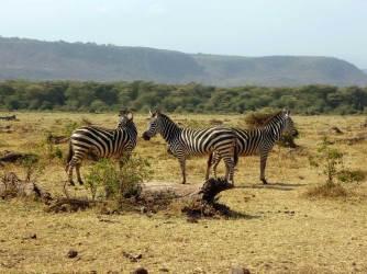 Zebra in Lake Manyara National Park.gallery_image.4