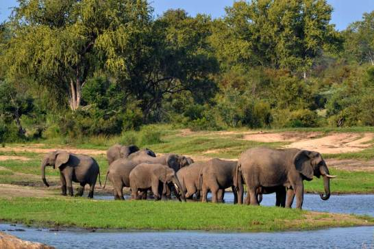 elephant-herd-watering-hole