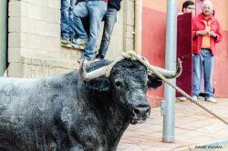 Malagueño. El Toro con Soga que Lodosa llevó a Benavente. Foto de Javier Encina