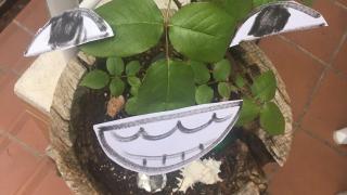 Una planta muy divertida!!!