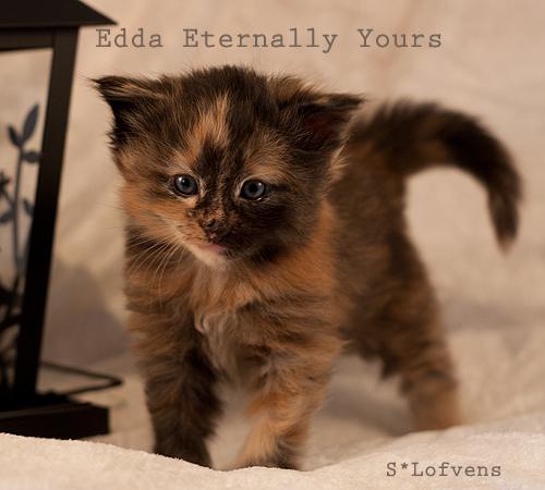 edda_4w_7356