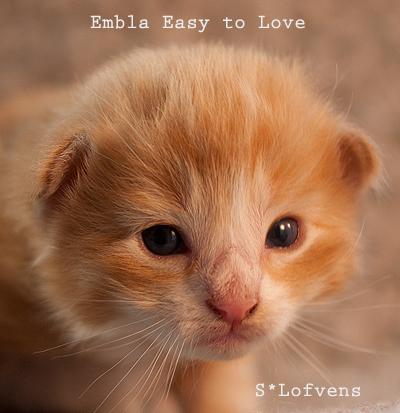 Embla_2w_6863_2