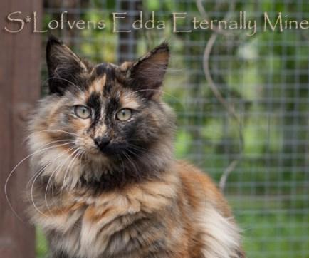 S*Lofvens Edda Eternally Mine 6 months