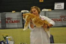 En tung och muskulös katt, säger domaren Brita Busse