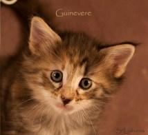 Guinevere, 5 weeks, NFO f 09 22
