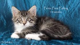 Fenix Free Falling, 10 weeks, NFO n 09 24