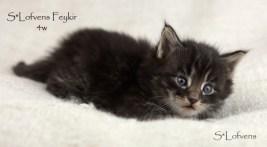 Feykir, 4 weeks, NFO n(s) 23