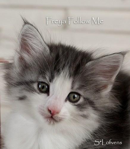 Freya Follow Me, 6 weeks, NFO ns 09 23