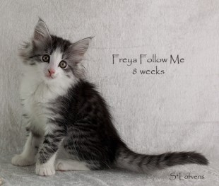 Freya Follow Me, 8 weeks, female, NFO ns 09 23