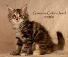 Guinevere Golden Jewel, 8 weeks, NFO f 09 22
