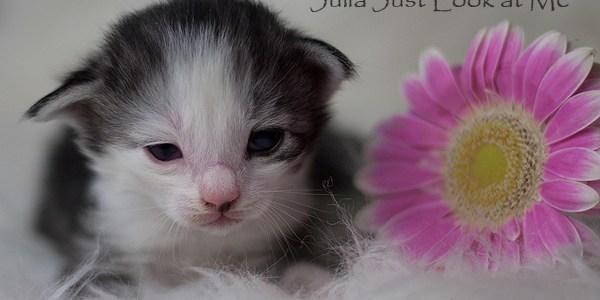 Kattungarna är 2 veckor och har under veckan öppnat sina ögon