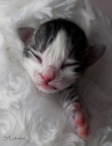 Juni Just One Kiss - Newborn