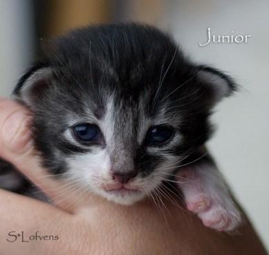 Junior Just Like Me