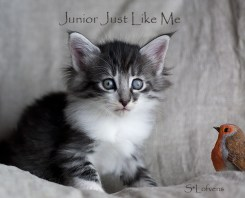 Junior Just Like Me