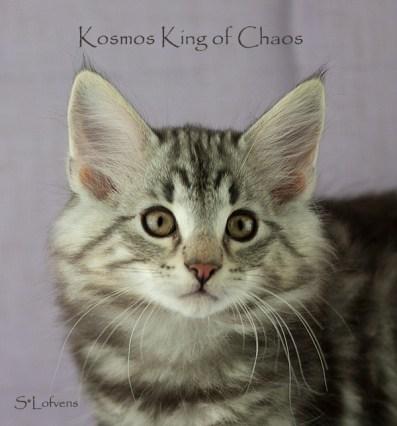 Kosmos 11 weeks