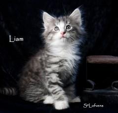Liam 7 weeks