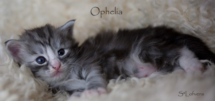 Ophelia 3 weeks