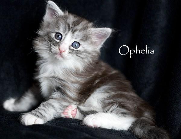"""Ophelia – bäst på """"spinning"""""""