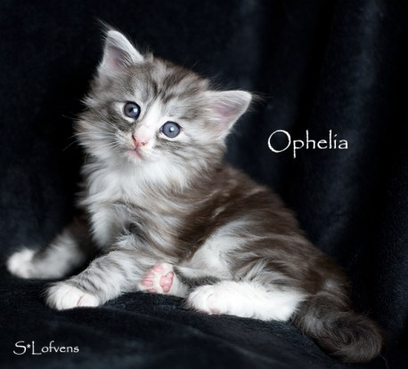 Ophelia 4 weeks