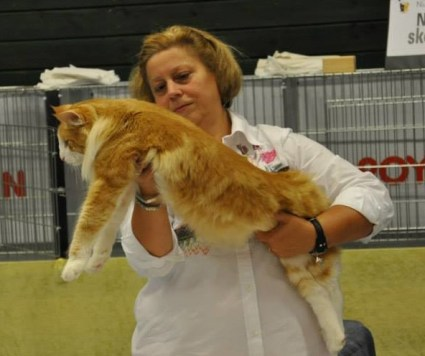 En tung och muskulös katt, säger Brita Busse