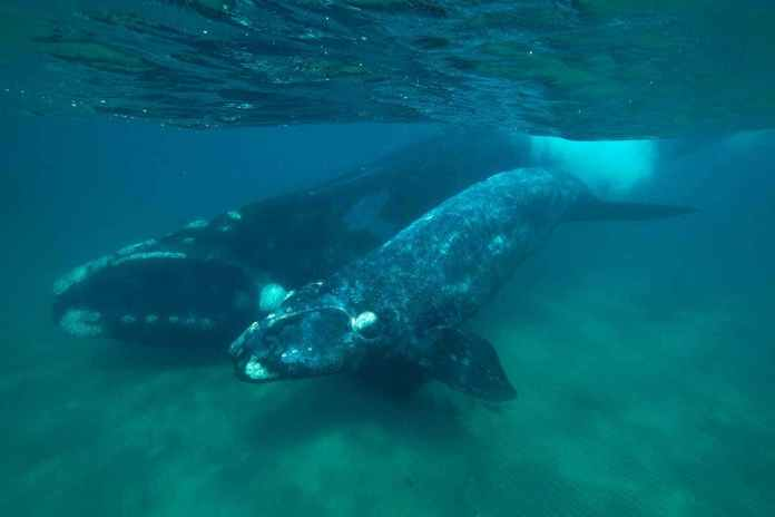 [Science] Whale mothers and calves whisper to avoid attracting predators – AI