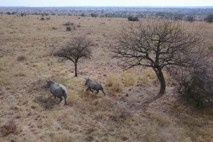 [Science] Drones could be used to herd rhinos away from poaching hotspots – AI