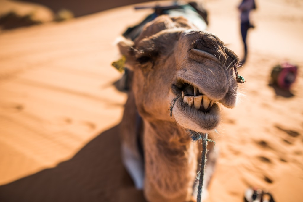 travel-destination-photographer-morocco-044