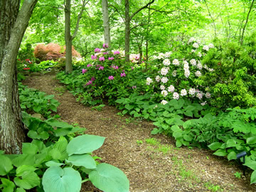 Dealing with dry shade green gardening with ann lovejoy for Woodland garden design