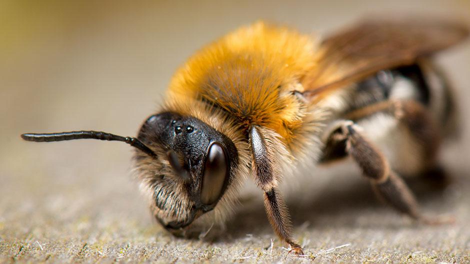 Pčela - savršenstvo prirode