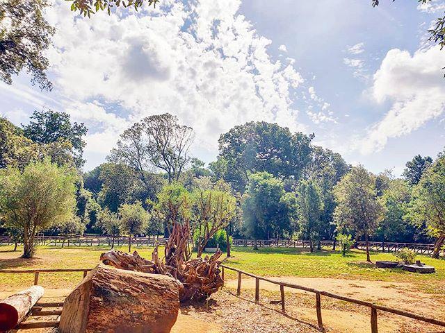 Pure Green Morning•••#sabaudia #circeo #parconazionalecirceo #nature #theoutdoorfolk #nature_lovers #nature_brilliance #naturephotography #natureshots #outdoors #nature_good #getoutside #earthgallery #tree_magic #tree #clouds #natureworld_photography #beautyofnature #in2nature #ig_naturelovers #ig_nature #natureswonder #ig_naturevibes #naturegram #mothernature