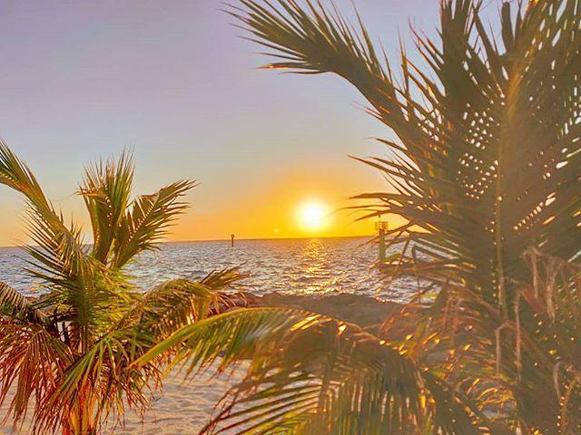 Wake up Ocean Cay! ️ #oceancay #msccruises #mscmarinereserve #travelphotography #sealife #travelblogger #travellife #sunrise #islandlife #island #traveladdict #traveler #seaside #travelphoto #palms #travel #travelgram #sunrise #travelpics #travelling #travelingram #sea #traveling #travelawesome #travelstoke #prilaga #seaview