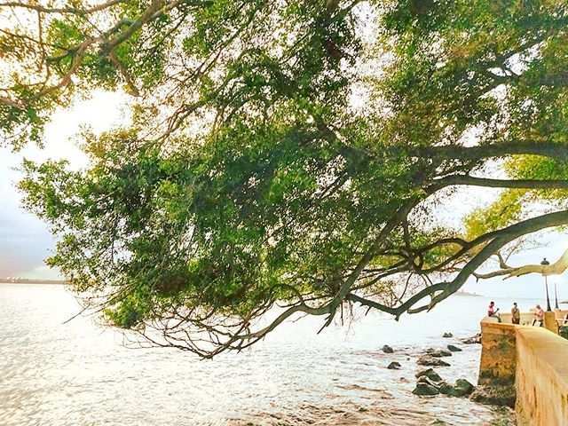 When the tree want touch the sea you can feel the magic 🌳 #sanjuan #portorico #puertorico  #travelawesome #traveling #cruiselife #tree_captures #travelingram #travelstoke #tree_magic #travelgram #travelphoto #travelpics #travelphotography #trees #traveler #cruise #travels #tree #travelpic #travellife #travelers #travelling #travelholic #traveller #traveladdict #travel #treelovers