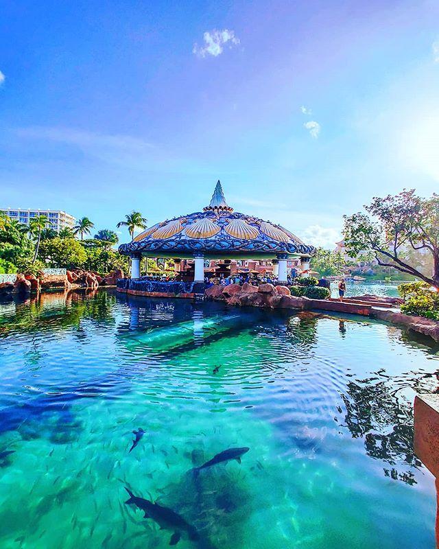 Feeling the blue #nassau #Bahamas #lifeatsea #shark #travelholic #travelpics #travelphotography #traveldiaries #travelling #traveltheworld #traveler #prilaga #traveladdict #crewlife #traveling #travelgram #travelawesome #atlantis #travelbug #travelblog #travelingram #crew #travellife #travelstoke #travels #travel