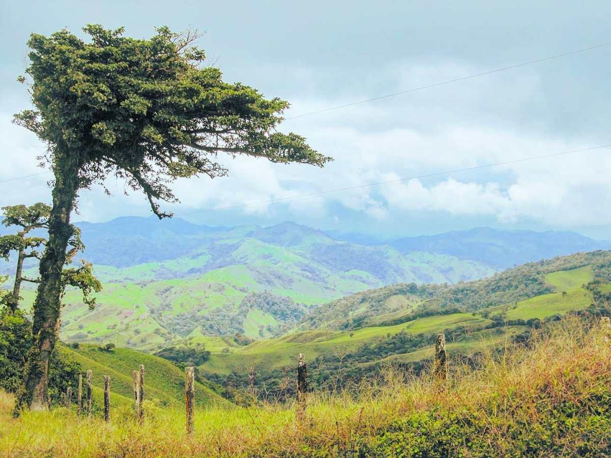 Riding over the Hills of Guanacaste 🌳🏞️🤙 Guanacaste region, Costa Rica 2011#costarica #trees #green #hills #clouds #travel #traveler #naturephoto #travelholic #travelingram  #travelblog #travelers #travelphotography #traveldeeper #nature #traveling #travelawesome #panorama #travelling #travelphoto #travelgram #travelpics #travellife #travels #traveller #traveladdict #travelstoke
