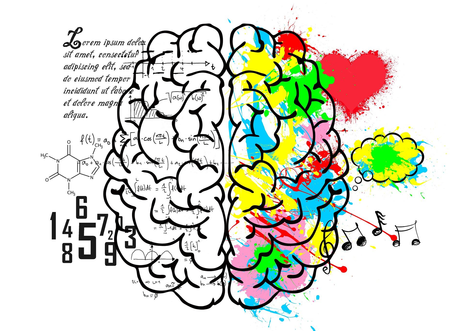 brain-5662029_1920.jpg
