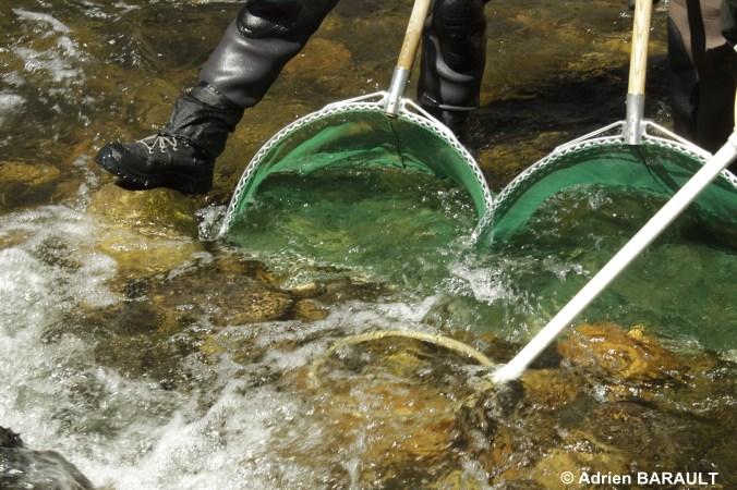 Anode et épuisettes pour pêches tacons