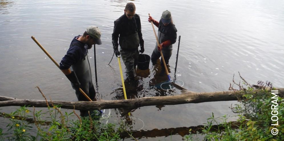 Action de pêche d'ammocètes