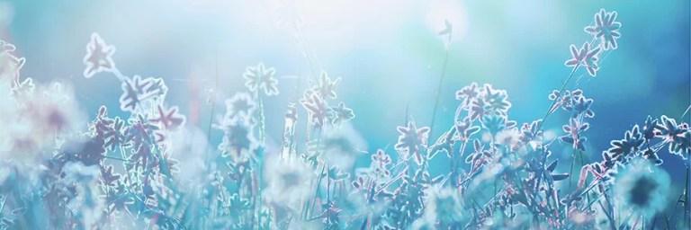 AdobeStock_kuva_aamu_kukkia_kedolla_sininen