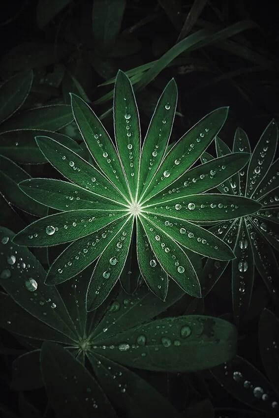 Unsplash_kuva_lehdet_kaste_tummanvihreä