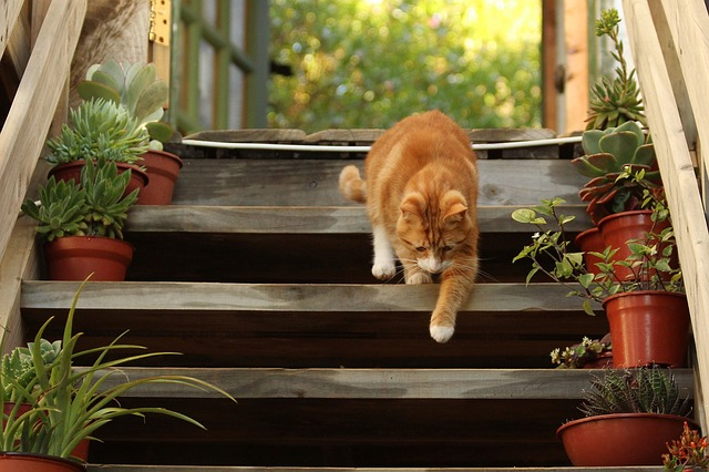 cat-on-steps-risky