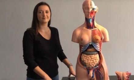 Como montar o modelo anatômico – Torso bissexual de 85cm e 24 partes da Coleman? [vídeo]