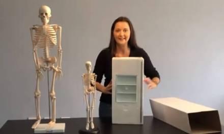 Como montar o esqueleto anatômico humano: 85cm e 42cm da Coleman [vídeo]