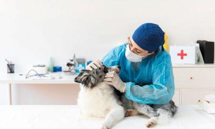 09 de setembro – Dia do Médico Veterinário: formação, funções e 8 áreas de atuação