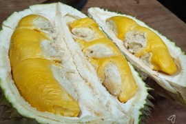 Bentong Durian - Visit LokaLocal for authentic local experiences