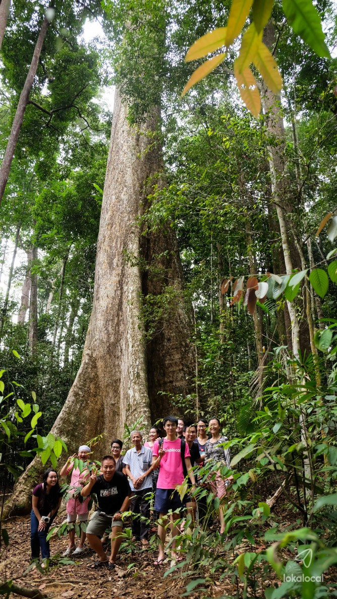 Ancient Trees - Find this experience at LokaLocal